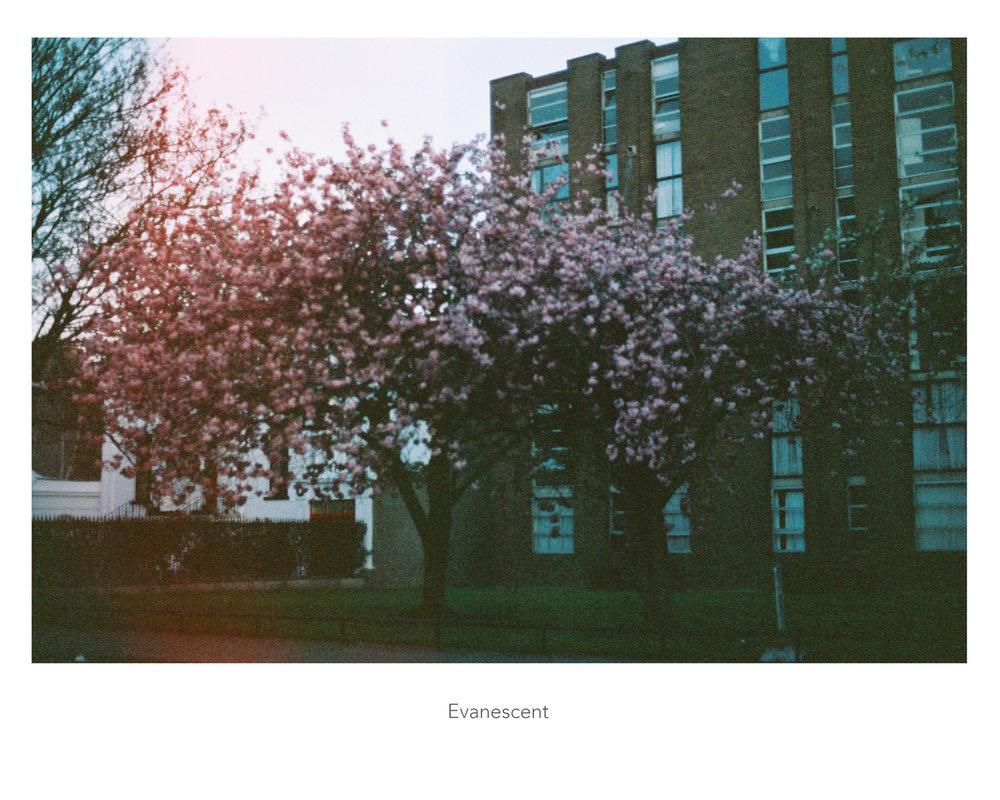 23_evanescent_web.jpg