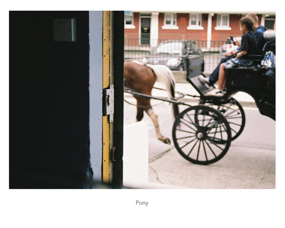 12_pony_web.jpg