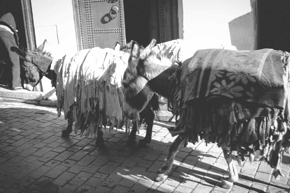 morocco_rabat_fez_casablanca_lesleyade_photography-19.jpg