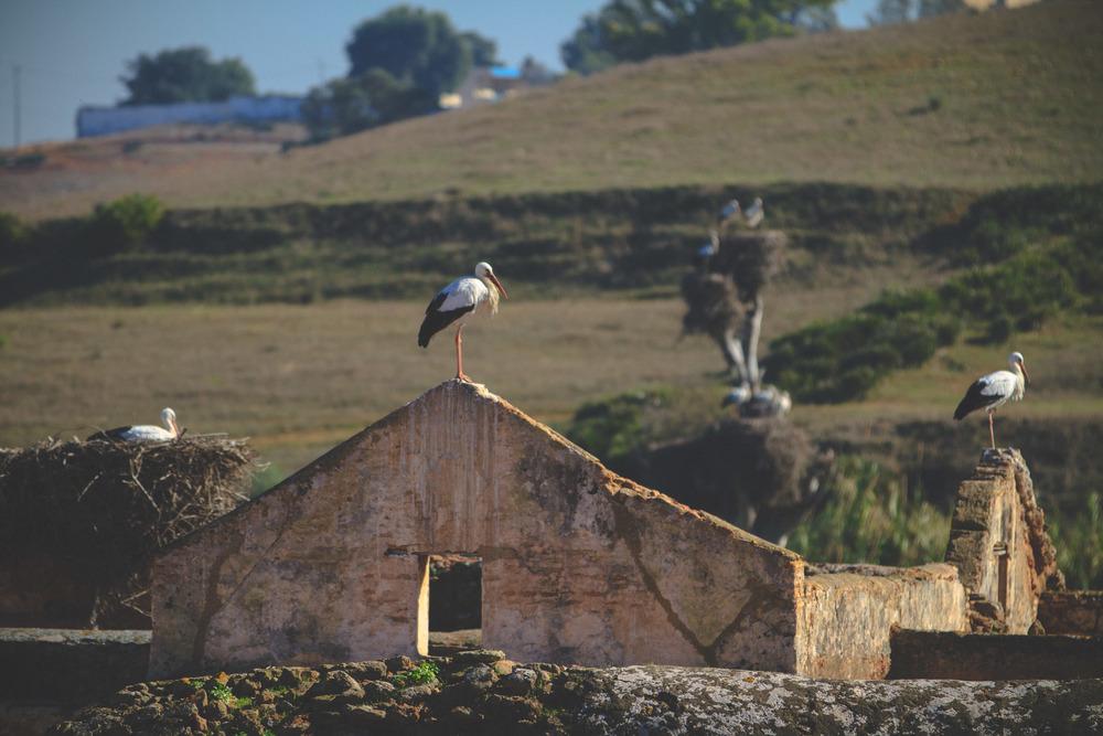 morocco_rabat_fez_casablanca_lesleyade_photography-24.jpg