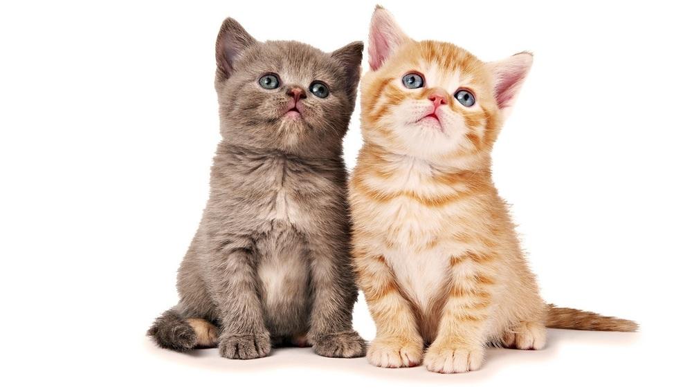 søte kattunger.jpg