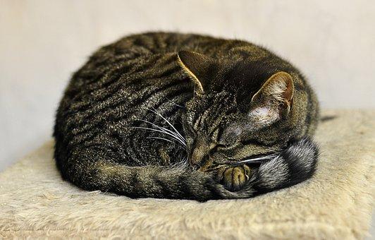 sleering cat 2.jpg