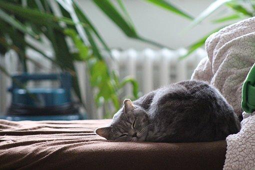 sovende katt.jpg