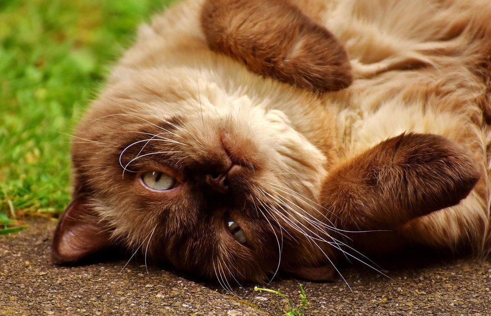 katt til nettside.jpg