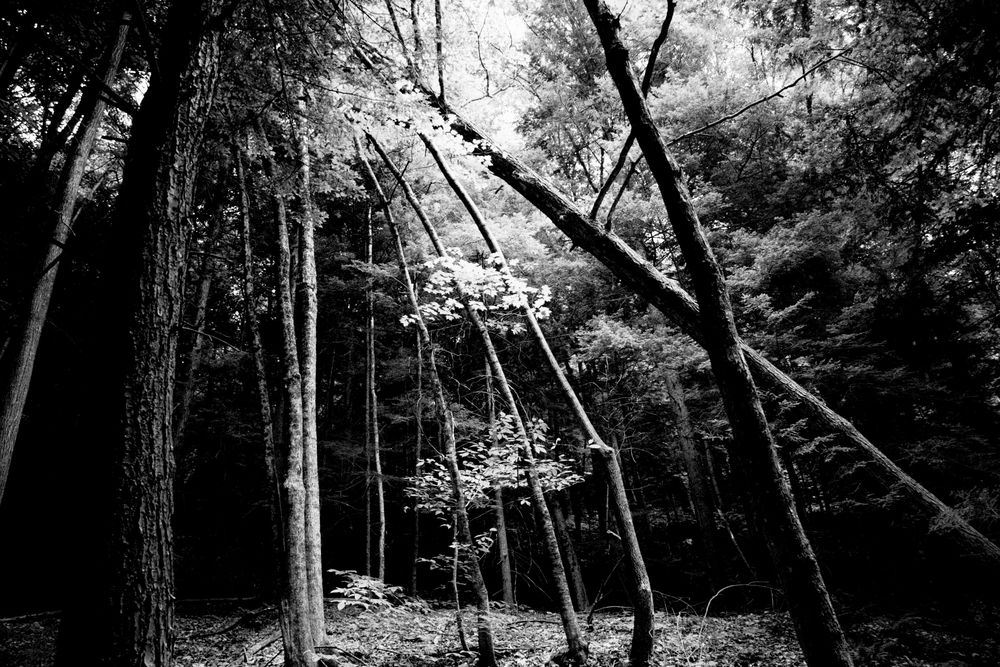 woodconverge1.JPG