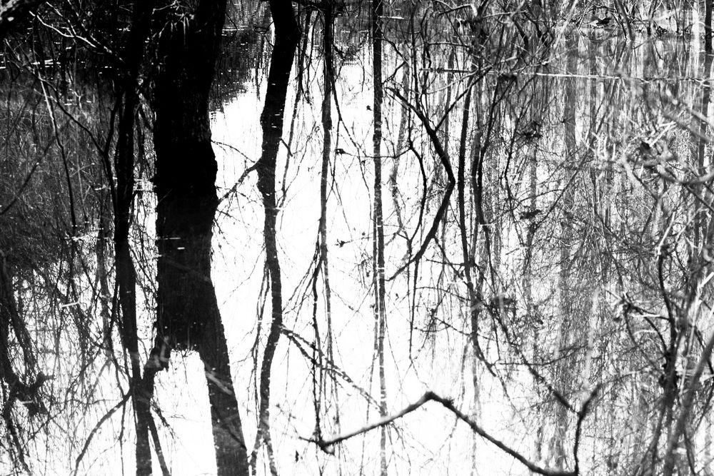 floridaswamp5.JPG