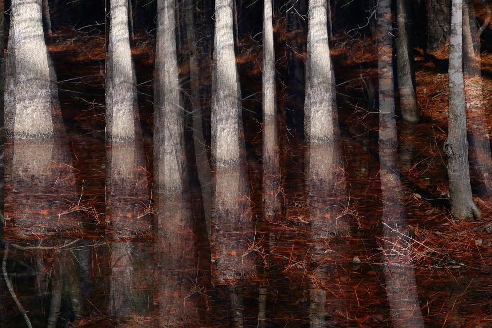 treescombo2.jpg