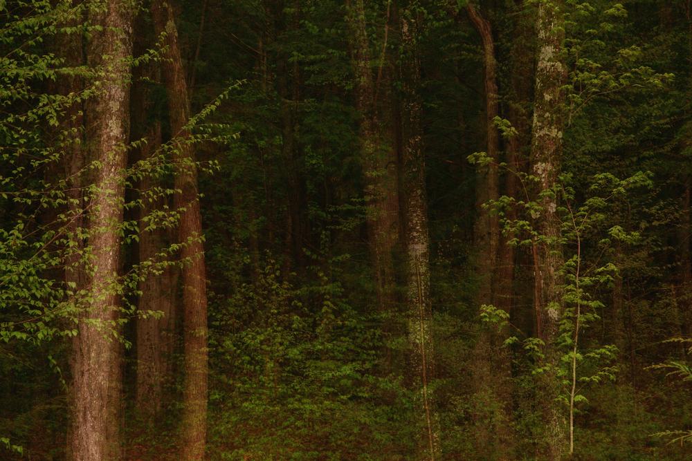 treeblend5 copy.jpg