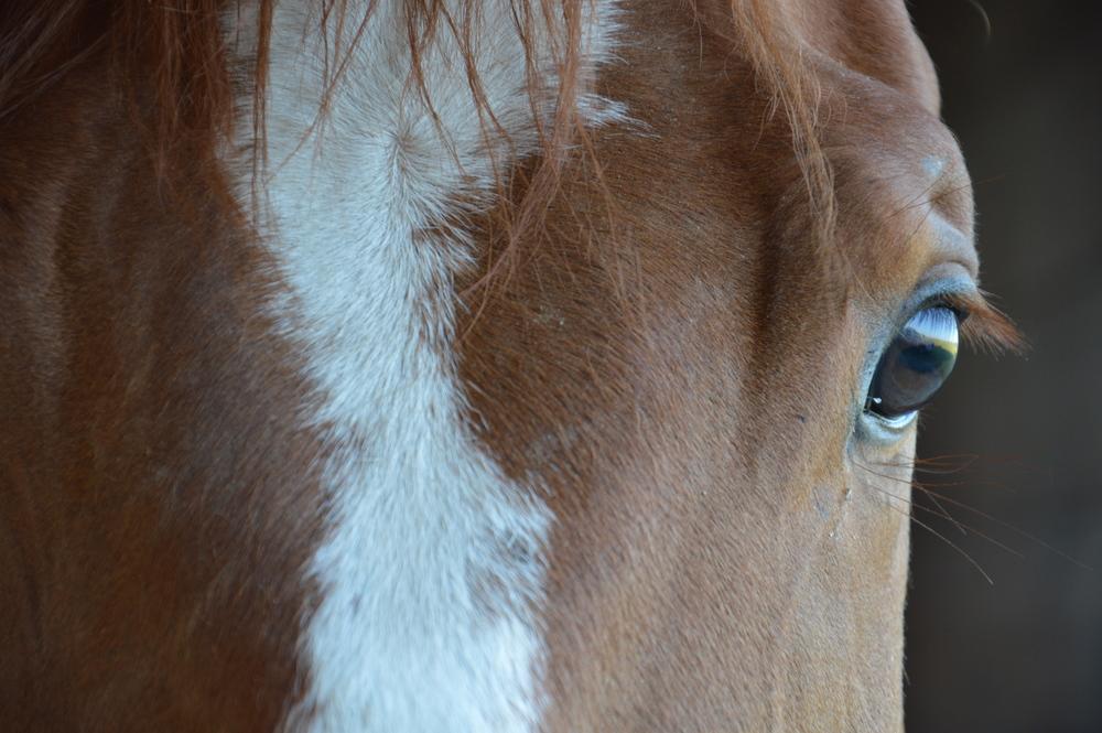horse'seye.jpg