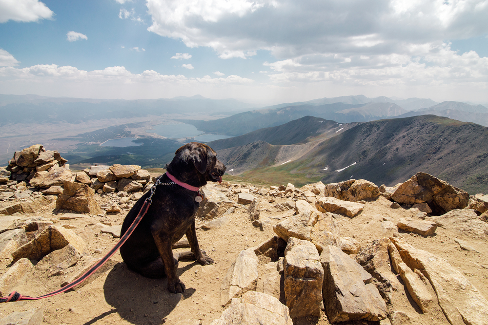 Puppy At The Summit Of Mount Elbert