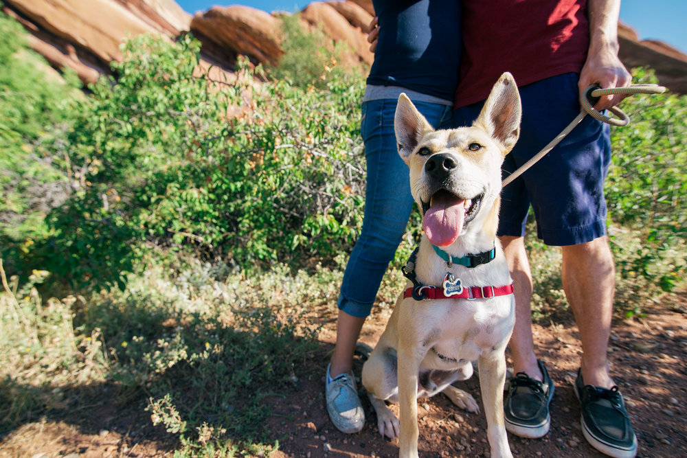 Puppy Photography in Red Rock Canyon Open Space