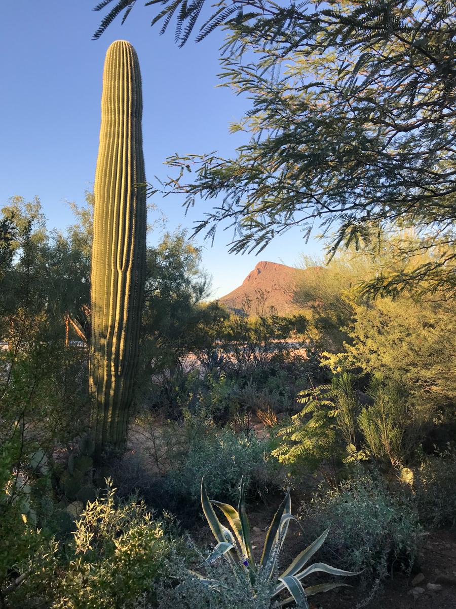 6601 N Desert View Dr-2037.jpg