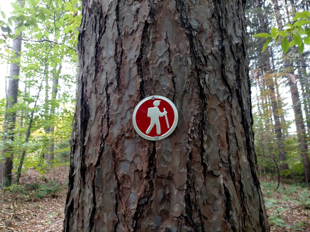 The Beaver Pond Trail at the Forest of The Dozen Dads is one of the many publicly accessible places to enjoy the outdoors in Otsego County featured on  OtsegoOutdoors.org