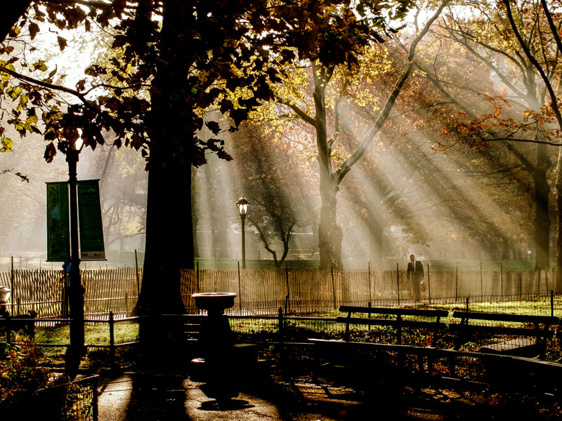 Into the morning light, Central Park.jpg