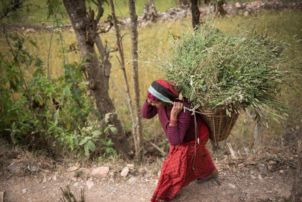 Nepal-web-14.jpg