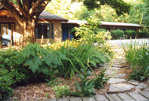 Summer Gardens and Walkway at The White Rabbit Inn
