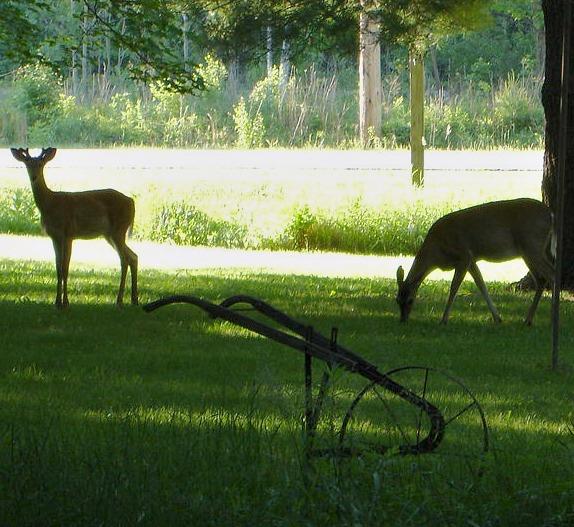Deer052212.jpg