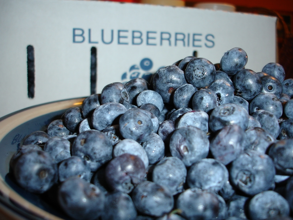Fresh Michigan Blueberries