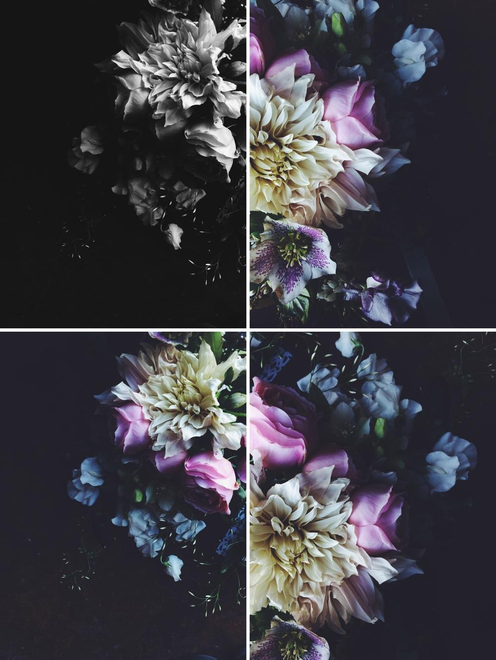 BTS images photographed for Geraldine Press, Botanical Series