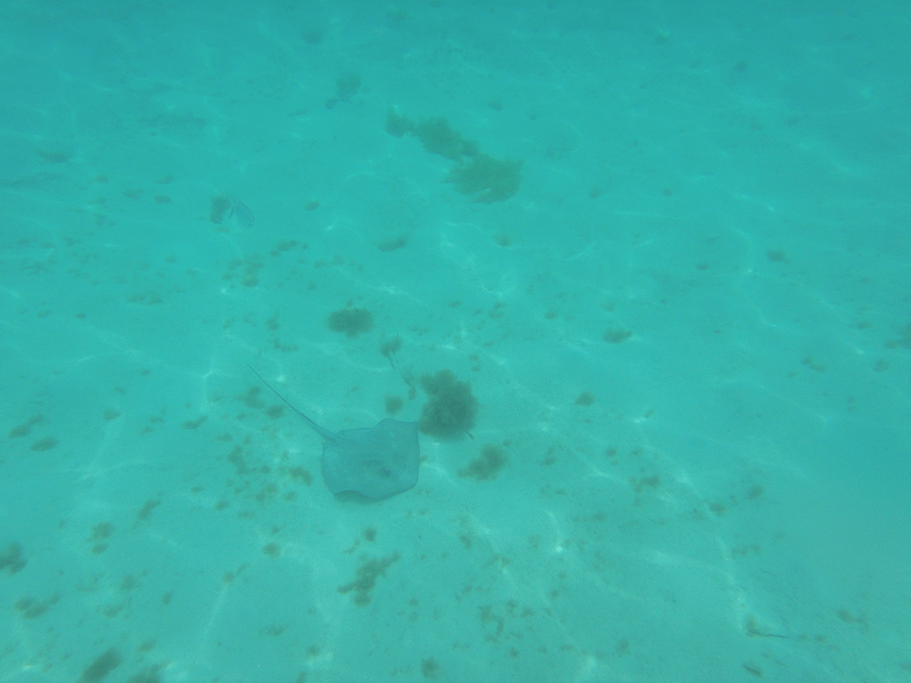 The first stingray we saw
