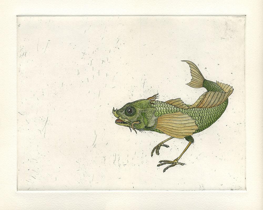 Agonis avialae