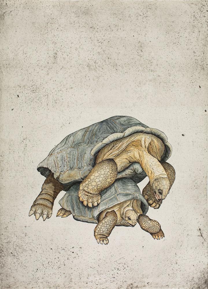 Aldabrachelys gigantean