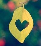 leaf heart.jpg