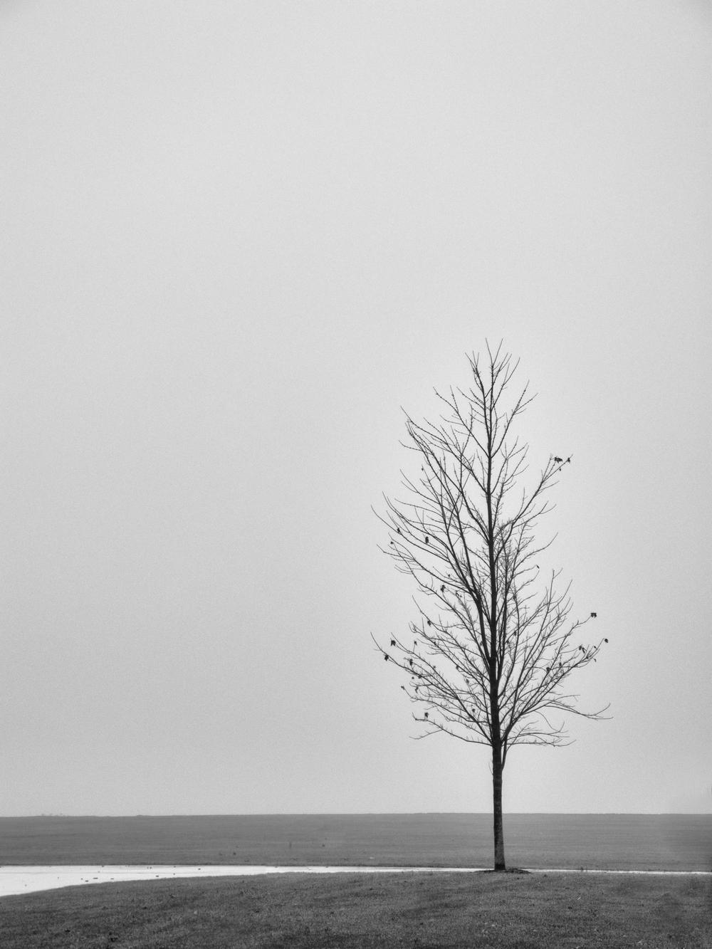 donetrees--12.jpg