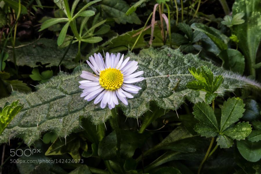 İlkbahar (Spring)