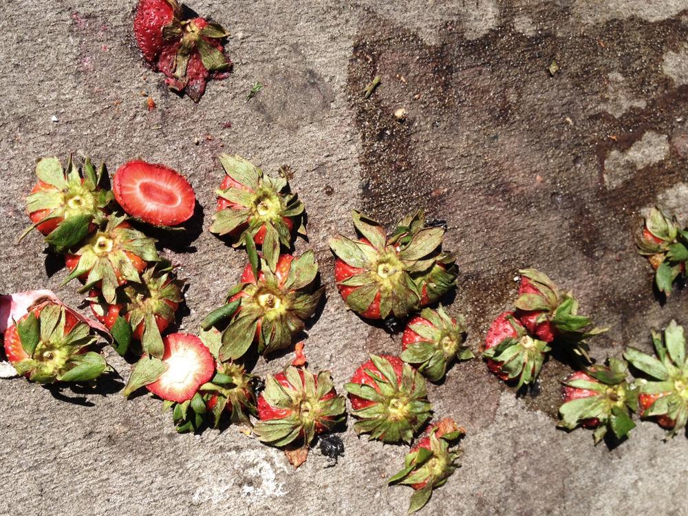 strawberries2_1E.jpg