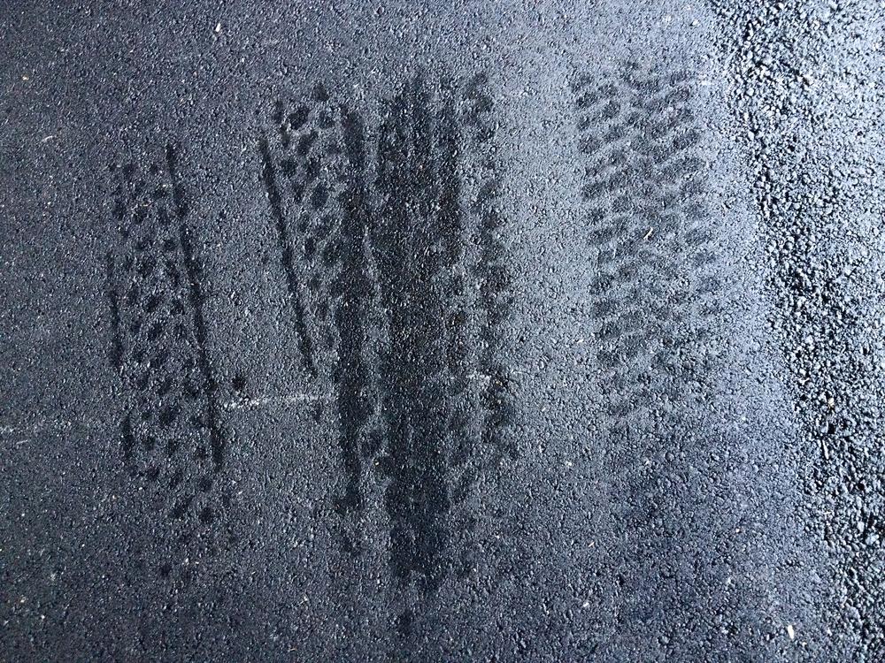 tire marks_1M.jpg