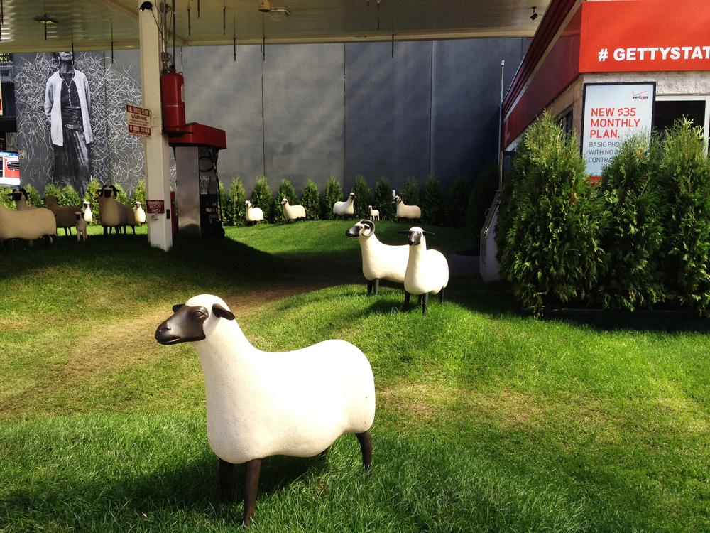 sheep_1M.jpg