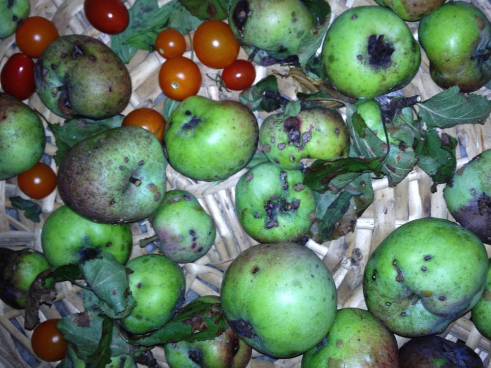 apples_1M.jpg