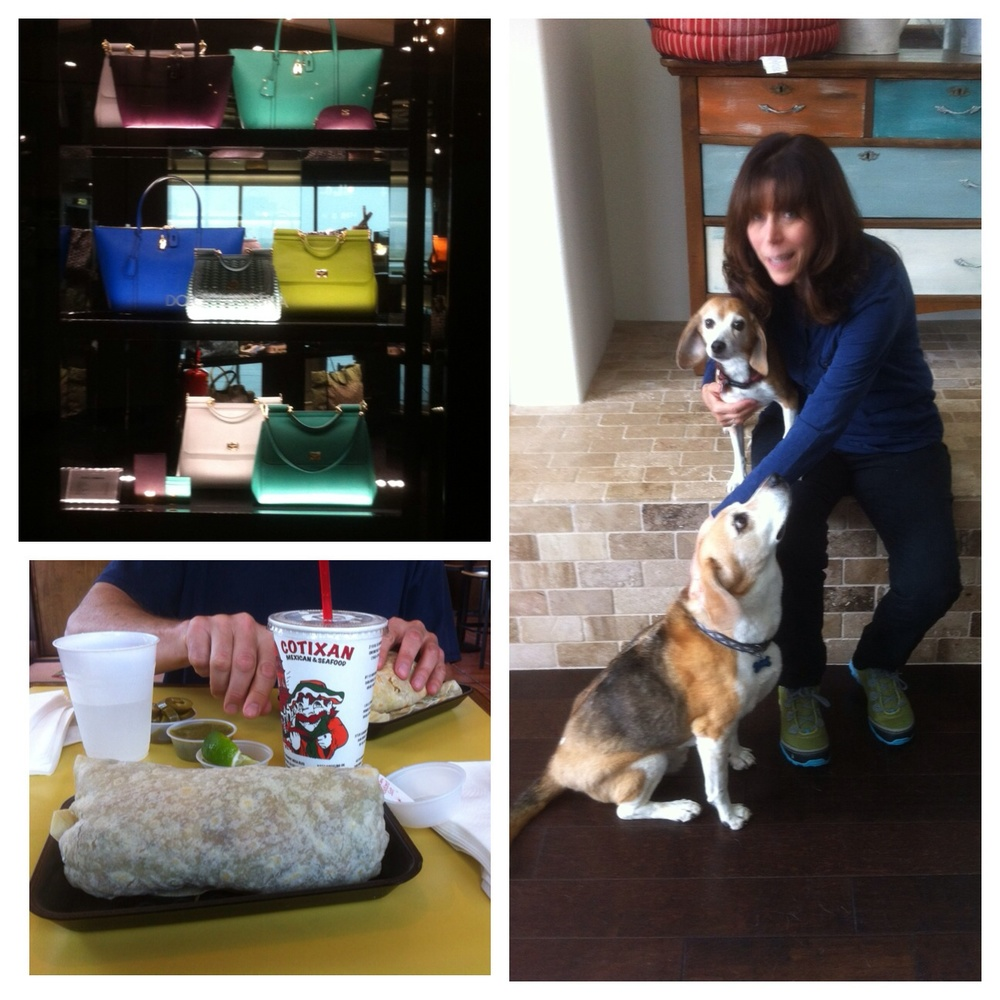 lft top: Good bye beautiful purses. Lft bottom: Hello burritos. Rgt. Bottom: Socks is the large beagle and Ollie is the small one.  i