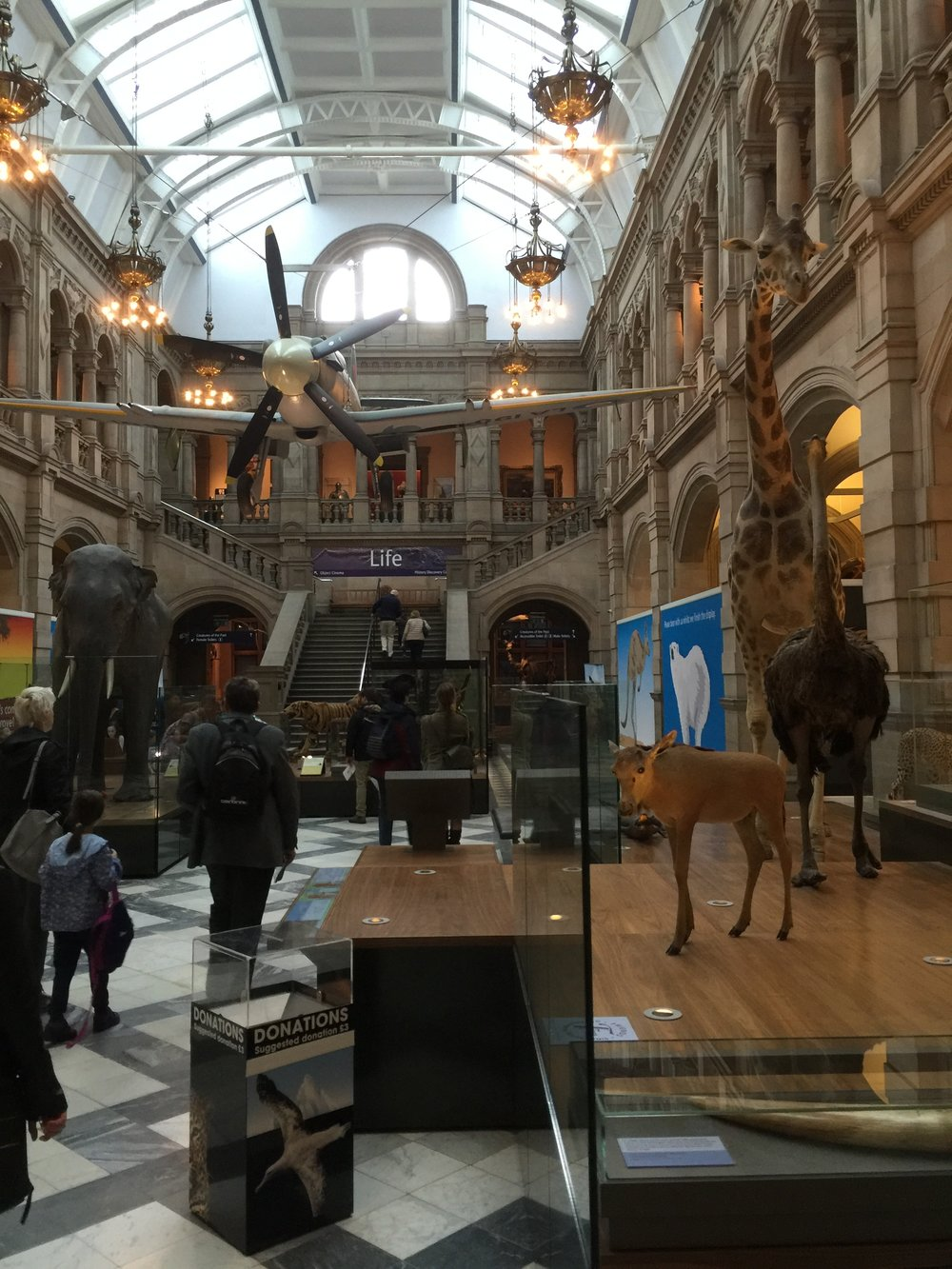 Quite a lot of different interesting exhibits inside the Kelvingrove Museum.