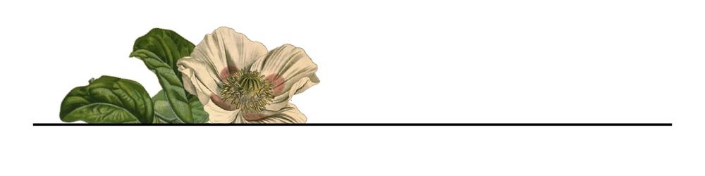 line & flowers copy.jpg
