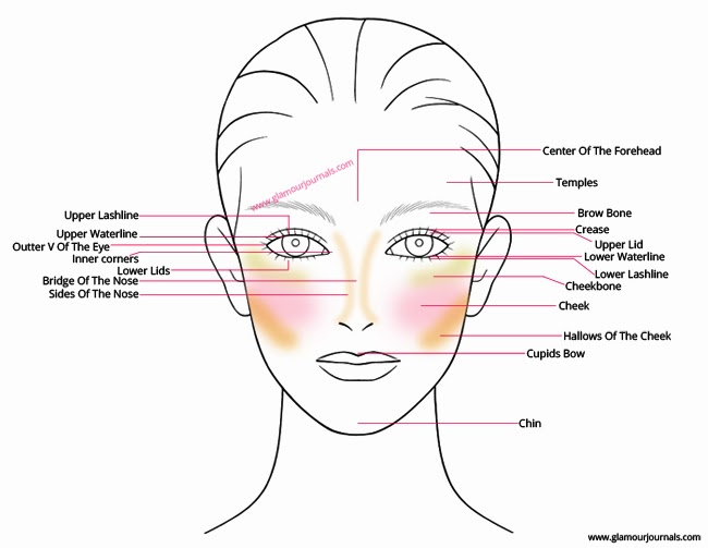 Facial Anatomy — Artists + Salon
