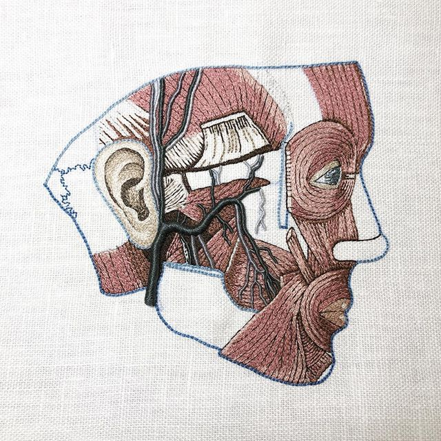 #embroideryguild #handembroidery #embroideryinstaguild #anatomy #workinprogress