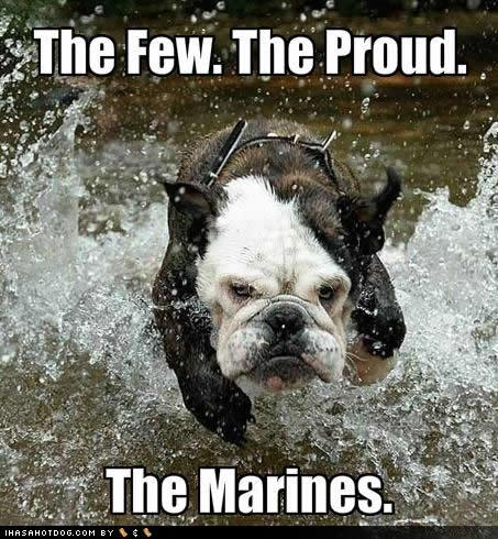 Marine Bulldog