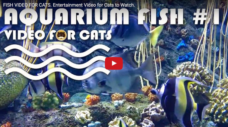 Fish Video For Cats Aquarium Fish 1 Entertainment Video For Cats