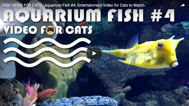 Fish Video For Cats Aquarium Fish 4 Entertainment Video For Cats