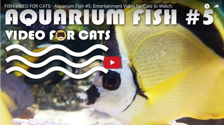 Fish Video For Cats Aquarium Fish 5 Entertainment Video For Cats