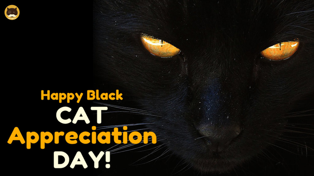 happy black cat appreciation day 01 tvbini videos for cats.jpg