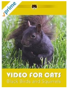 Video for Cats Black Birds and Squirrels.png
