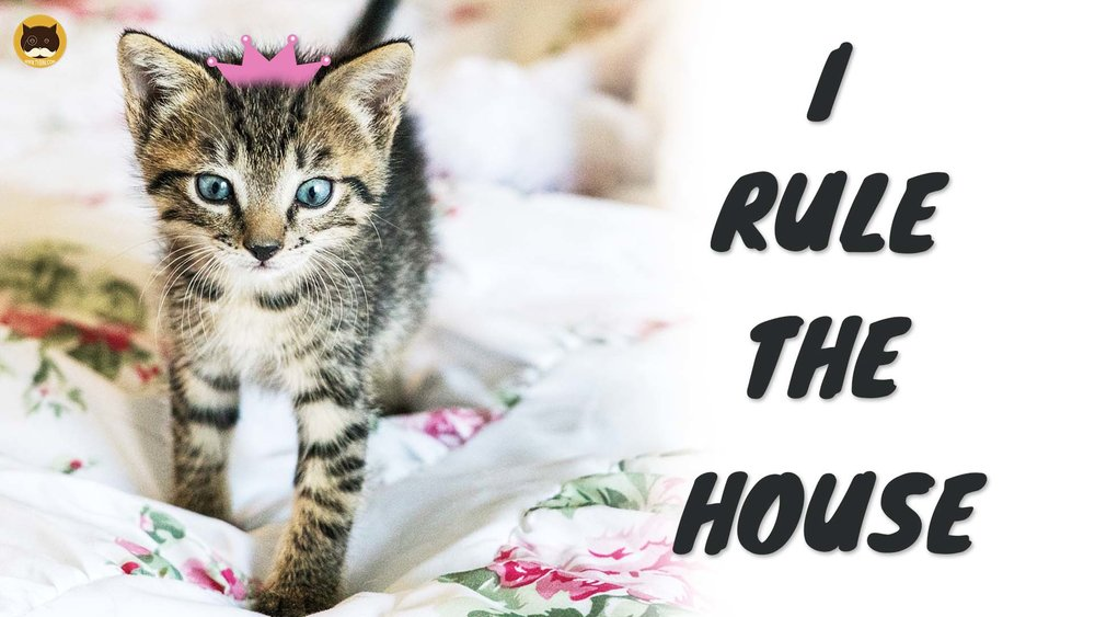 I RULE THE HOUSE 2.jpg