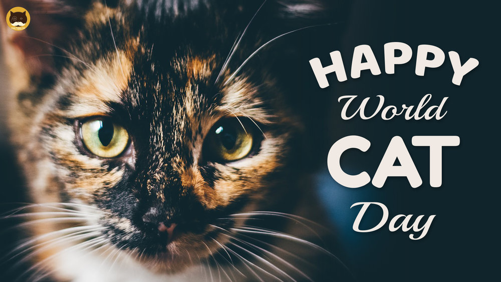 happy world kitty cat day.jpg