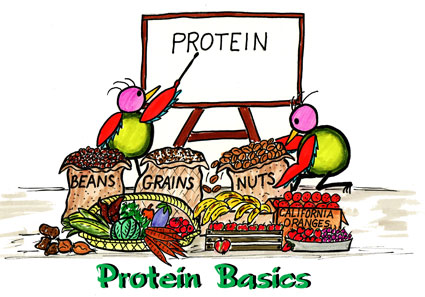understanding protein