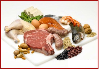 how protein helps us
