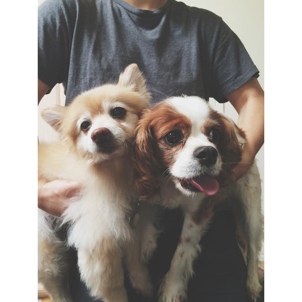 Bella the Pomeranian &  AydenButton