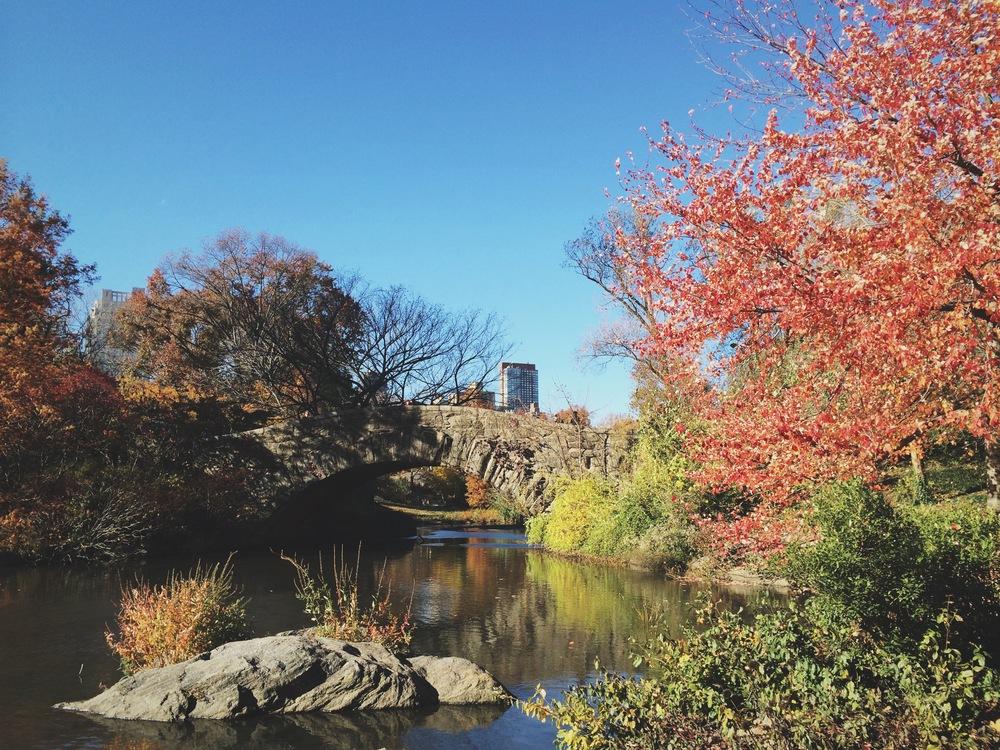 central park, november 2014